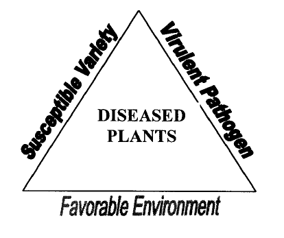 Figure 1: Disease triangle.
